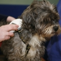 Microchipping will be a legal requirement for all dogs by 31st March