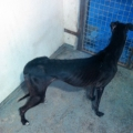 A Waterford man was fined €2350 for cruelty to Greyhounds