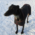 Tips and advice to ensure your pets are safe and warm during cold weather