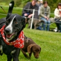 The annual Scruffs Dog Show returns to Belvedere House Gardens & Park