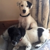 Pups Tracker and Lily who were adopted from the ISPCA recently