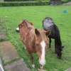 Meath woman convicted of cruelty to horses
