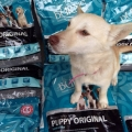 A huge thanks to Burns Pet Nutrition for the kind donation of puppy food