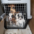 27 dogs in ISPCA care after being discovered in a van at Cairnryan ferry port by Police Scotland