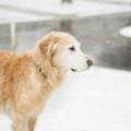 ISPCA Winter Pet Care Tips