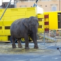 ISPCA launches The Big Stop campaign calling for a ban on the use of wild animals in circuses