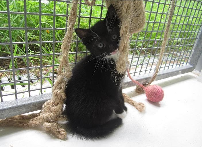71 Cats And Kittens In Our Careispca