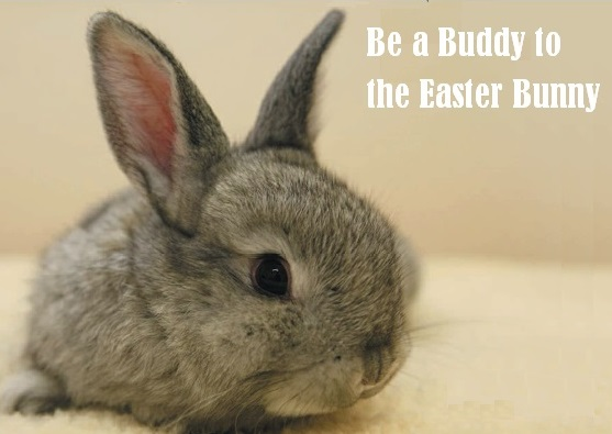 ISPCA Rescued Bunny, Be a Buddy to the Easter Bunny