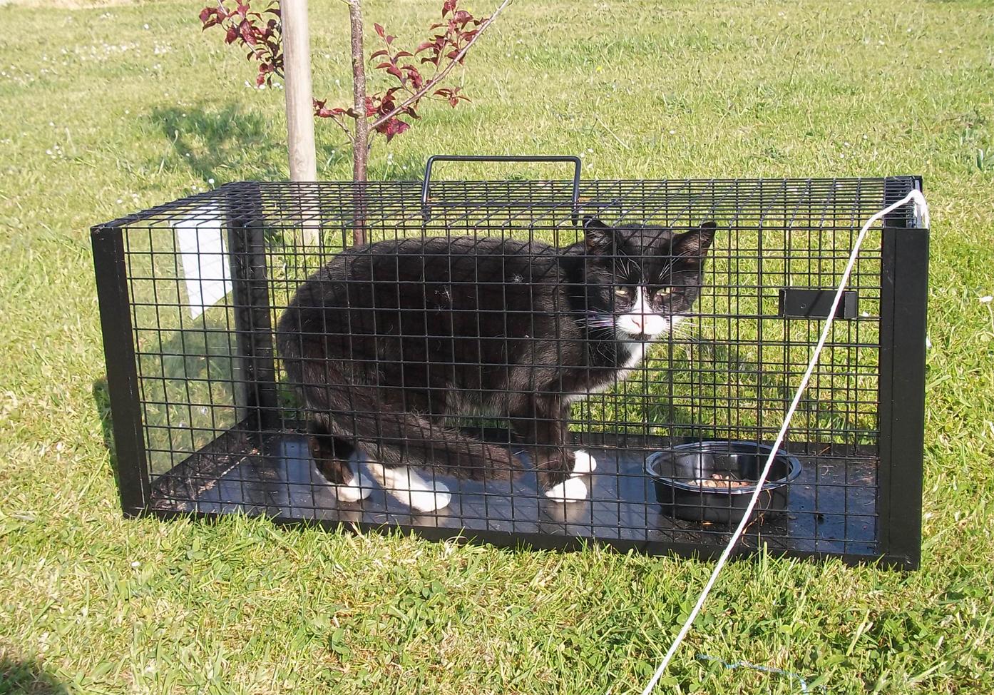 C mo saco los gatos vecinos de mi jard n p gina 2 for Ahuyentar gatos de mi jardin