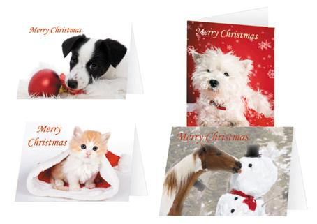 each pack of ispca charity christmas cards contain 16 luxury cards 4x4designs and envelopes that will delight any receiver cute animal quotes on the back - Animal Charity Christmas Cards