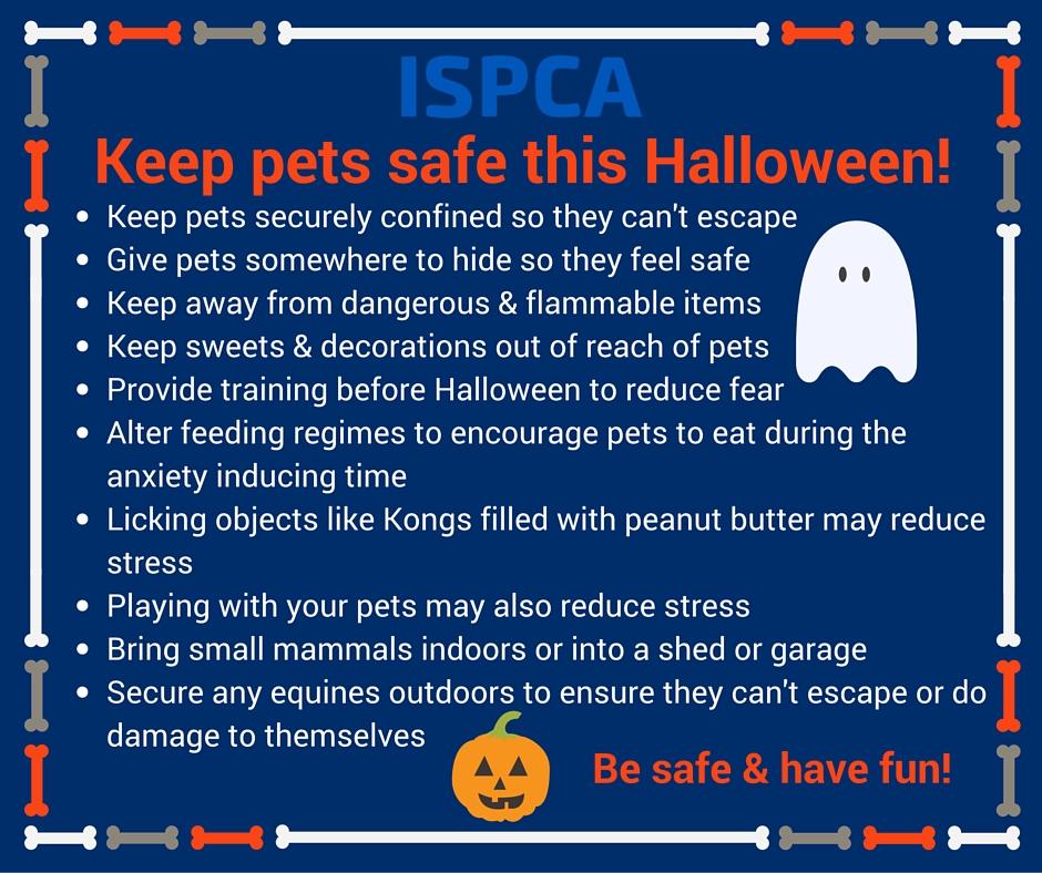 ISPCA tips on keeping your pet safe this HalloweenISPCA