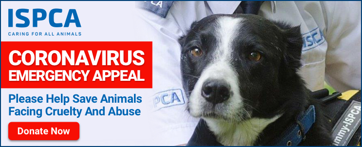 ISPCA receive over 69,000 calls to national animal cruelty