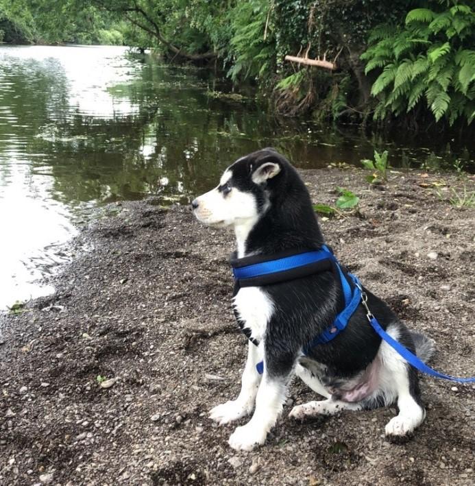 ISPCA Ireland - Irish SPCA - Animal Charity - Rescue Dogs, Cats